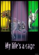 cage-photo04