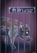 cage-photo05